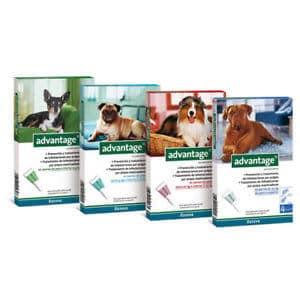 אדוונטג' תכשיר למניעת פרעושים בכלבים