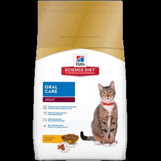 הילס סיינס פלאן חתול בוגר בריאות הפה