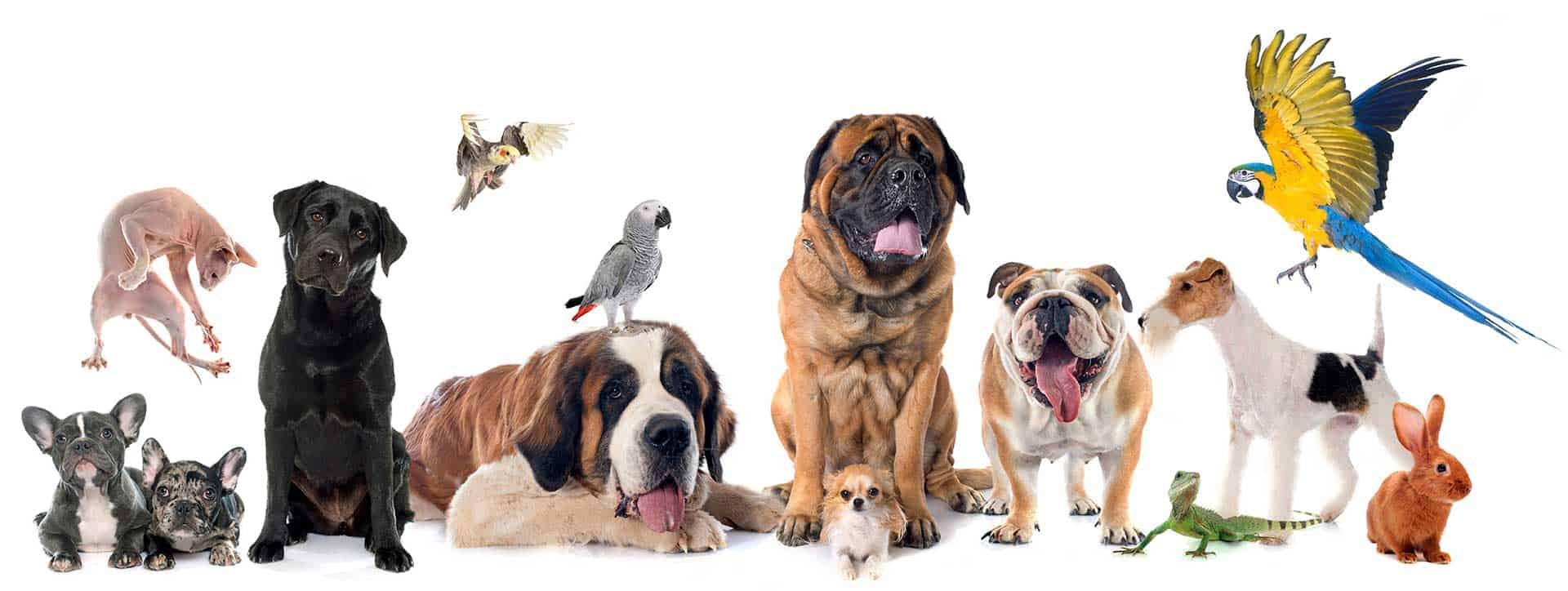 חנות חיות - חיות ברמה
