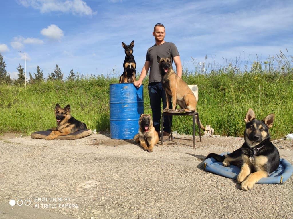 אילוף כלבים בצפון - חיות ברמה