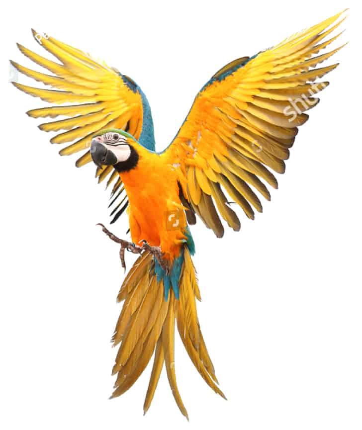 ליבינג וורלד אבן מינרל לציפור בטעם תפוז
