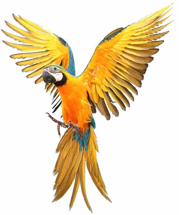 מחלקת הציפורים