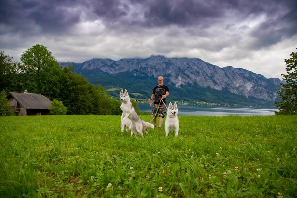 פנסיון כלבים בצפון